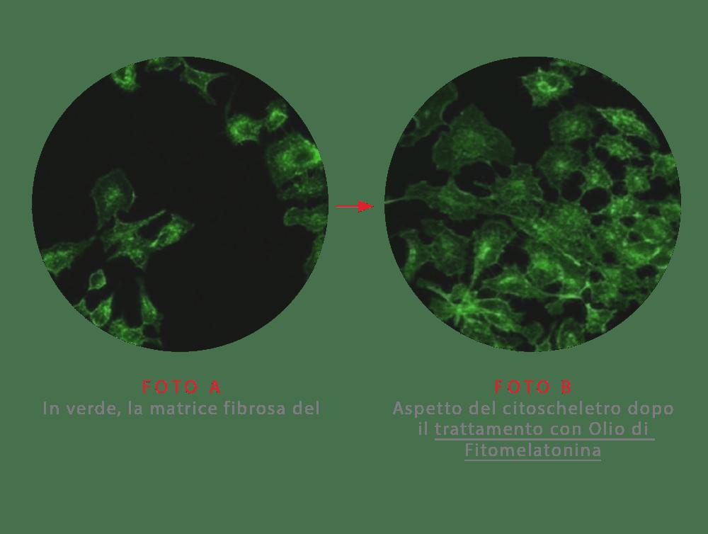 A2 - Fitomelatonina